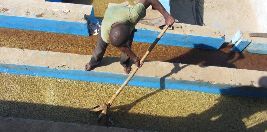 Congo Kivu Fully Washed