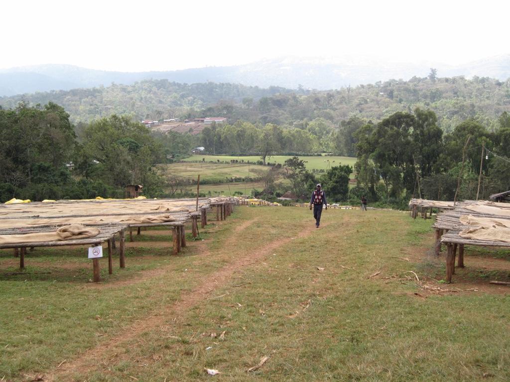 Ethiopia Yirgacheffe koffieplantage