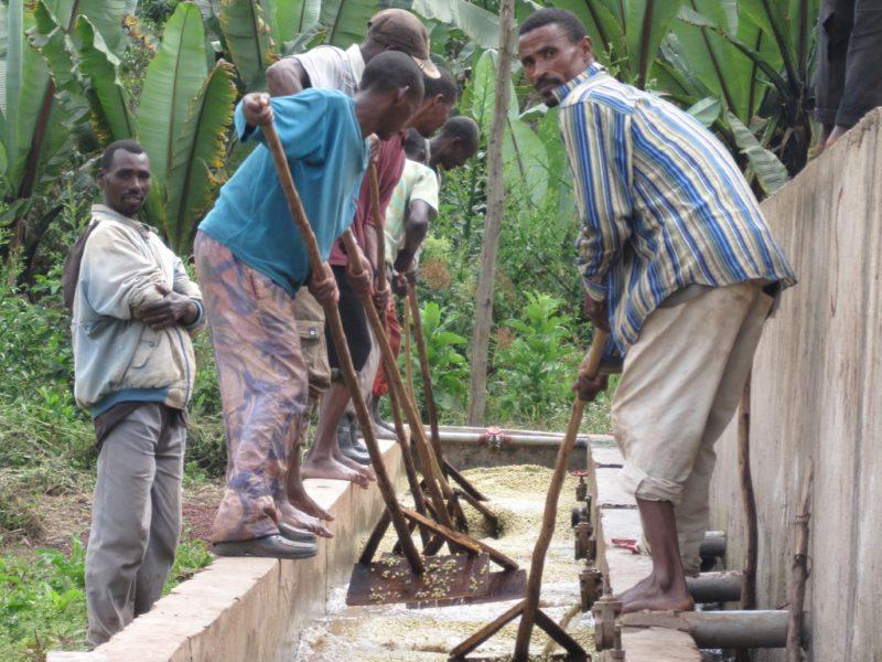 Ethiopia Yirgacheffe koffie wassen