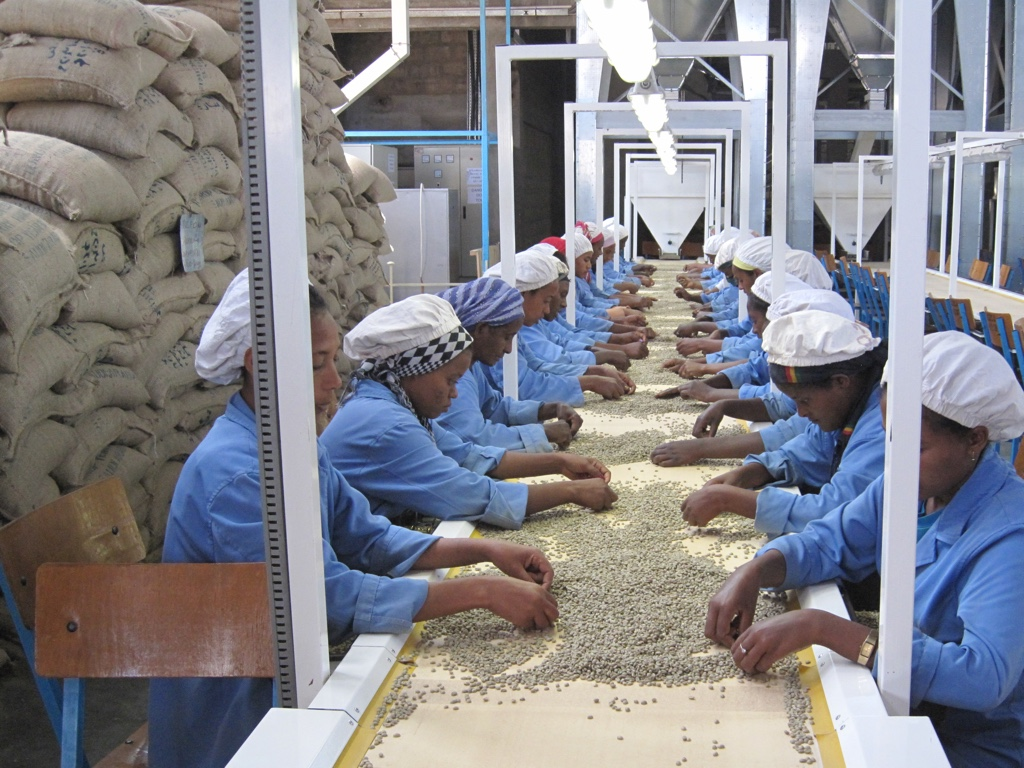 Ethiopië Yirgacheffe koffie sorteren