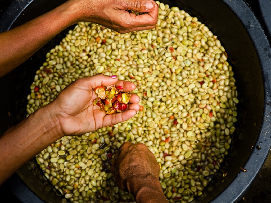 Indonesia Sumatra koffie origine raf coffee gent