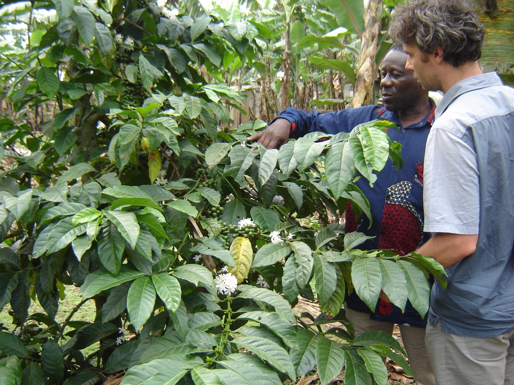 Uganda koffie origine bio fairtrade raf coffee gent