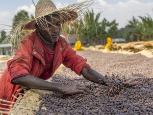 natural koffie online kopen
