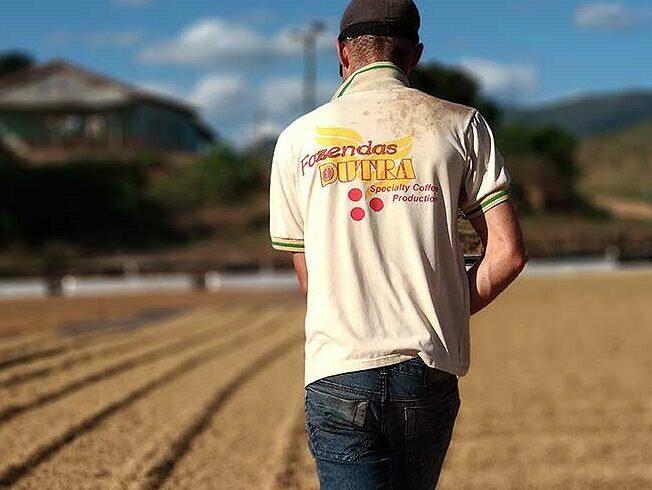 Fazenda Dura koffieoogst