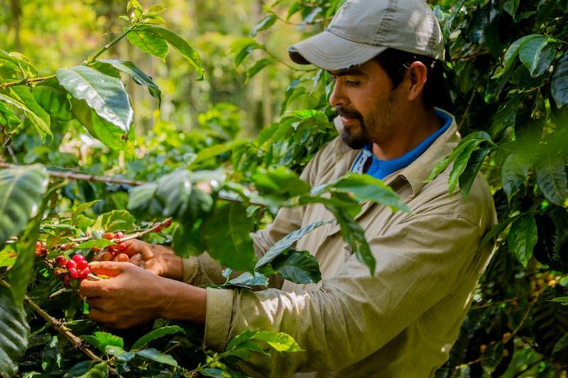 origine koffie uit Honduras, Kivu, Indonesië, Ethiopië